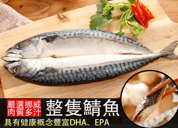 【海之金】正挪威XXL鯖魚一夜干(380g/尾) 2