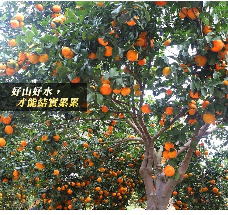 【預購】苗栗迷你珍珠砂糖橘禮盒(4斤±10%/盒) 2
