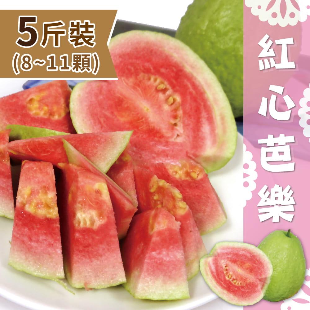【產地直送】屏東精選紅心芭樂5斤(8~11顆) 0