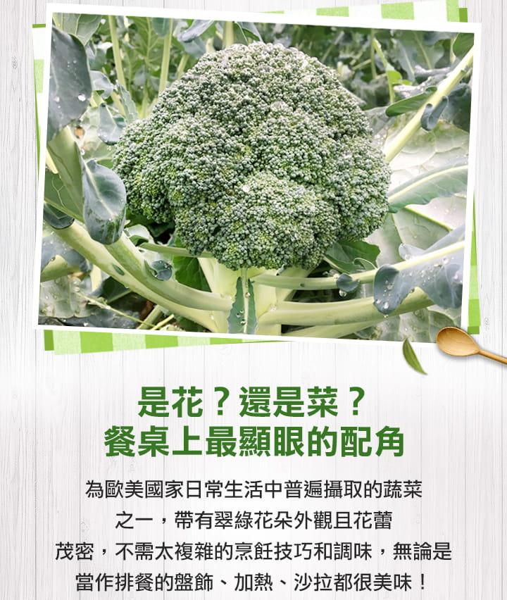 【愛上美味】鮮凍青白花椰菜 3