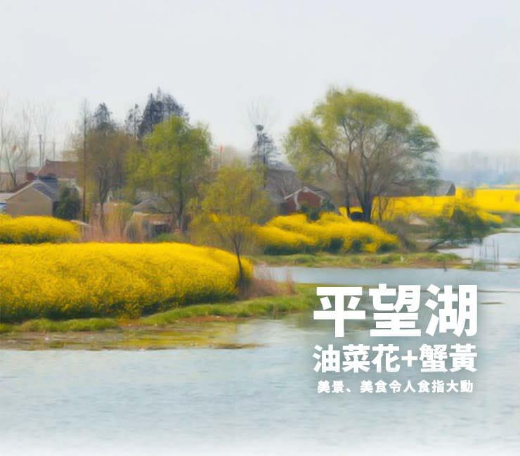 江蘇平望湖大閘蟹近五兩-肥美飽滿(約180g/隻) 2