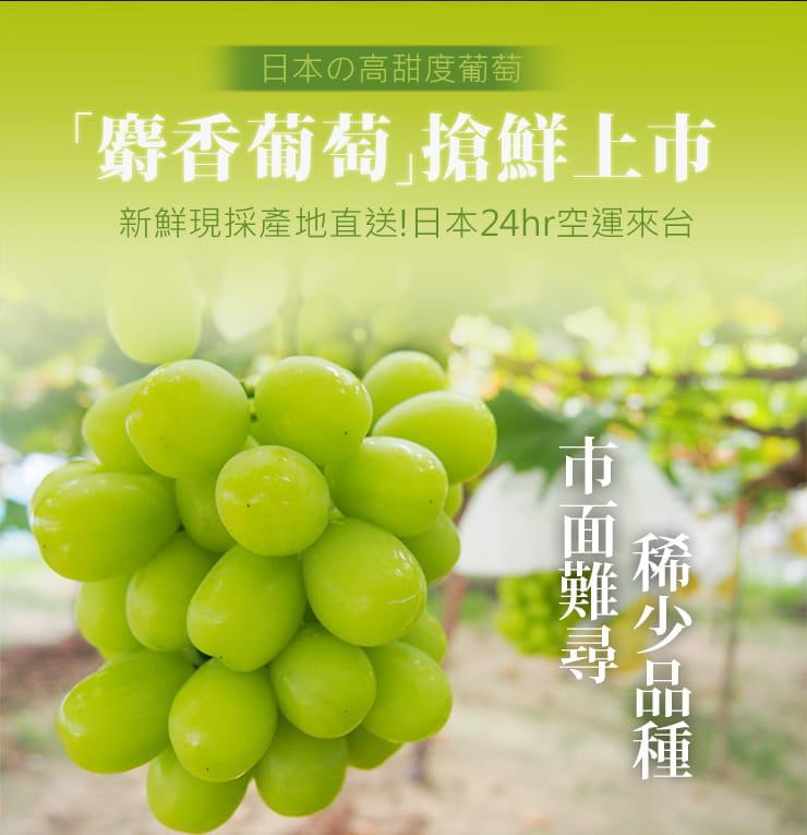 【築地一番鮮】日本空運頂級無籽麝香葡萄(約550g/串) 3