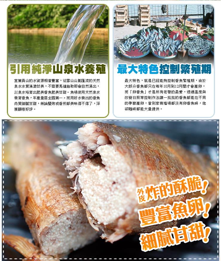 【築地一番鮮】宜蘭帶卵小香魚(12尾裝/920G/盒) 2