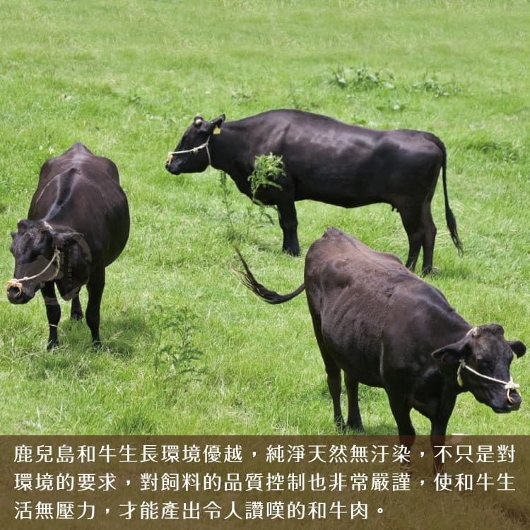 欣明◆日本A4純種黑毛和牛嫩肩菲力牛排(200g/1片) 5