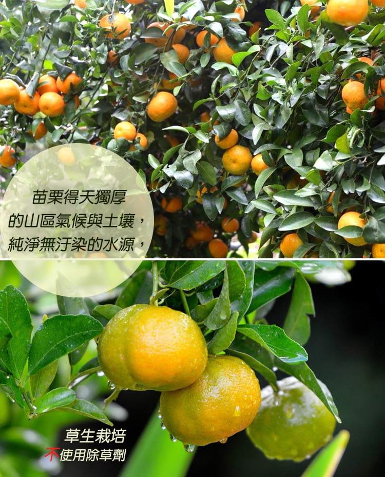 【預購】苗栗迷你珍珠砂糖橘禮盒(4斤±10%/盒) 1
