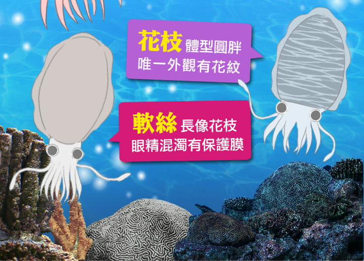【愛上美味】野生鮮凍天使軟絲(300g±10%/2隻/包) 3
