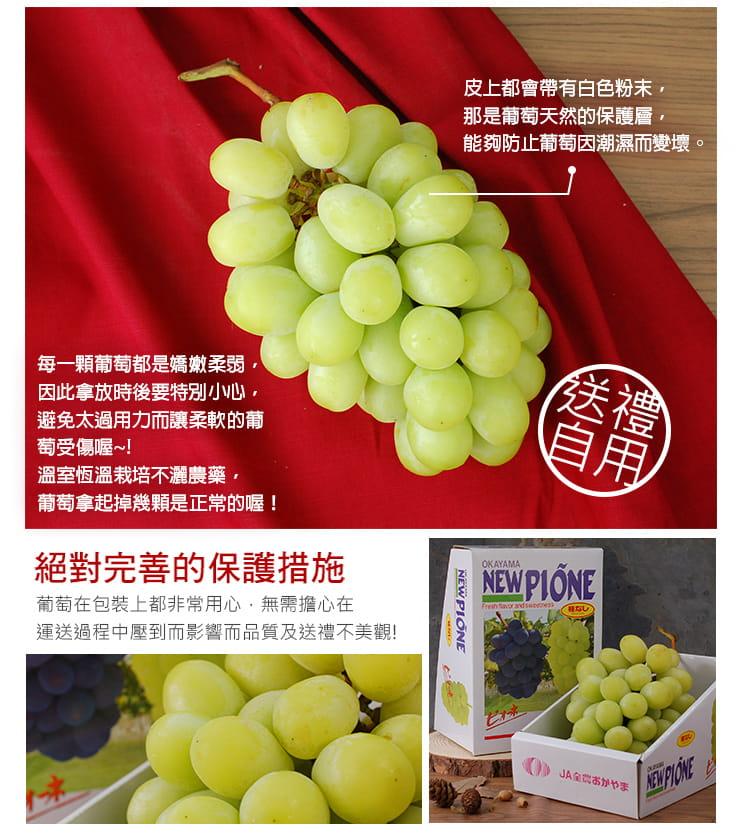 【築地一番鮮】日本空運頂級無籽麝香葡萄(約550g/串) 7